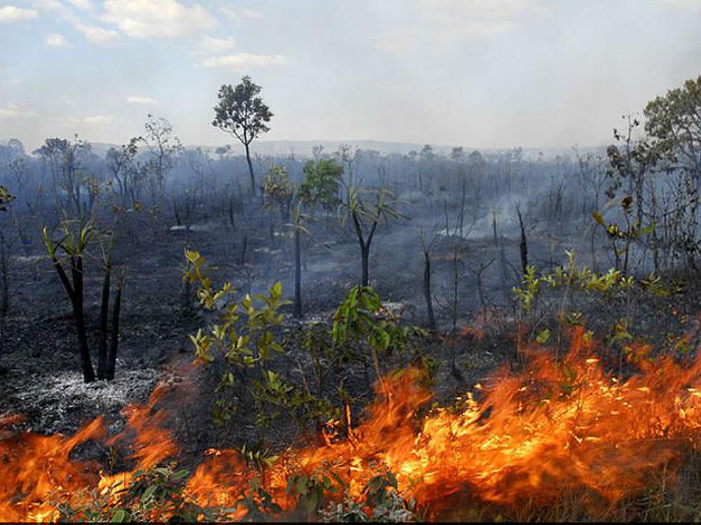 Imagem de Produtores rurais se unem para traçar estratégias emergenciais contra as queimadas