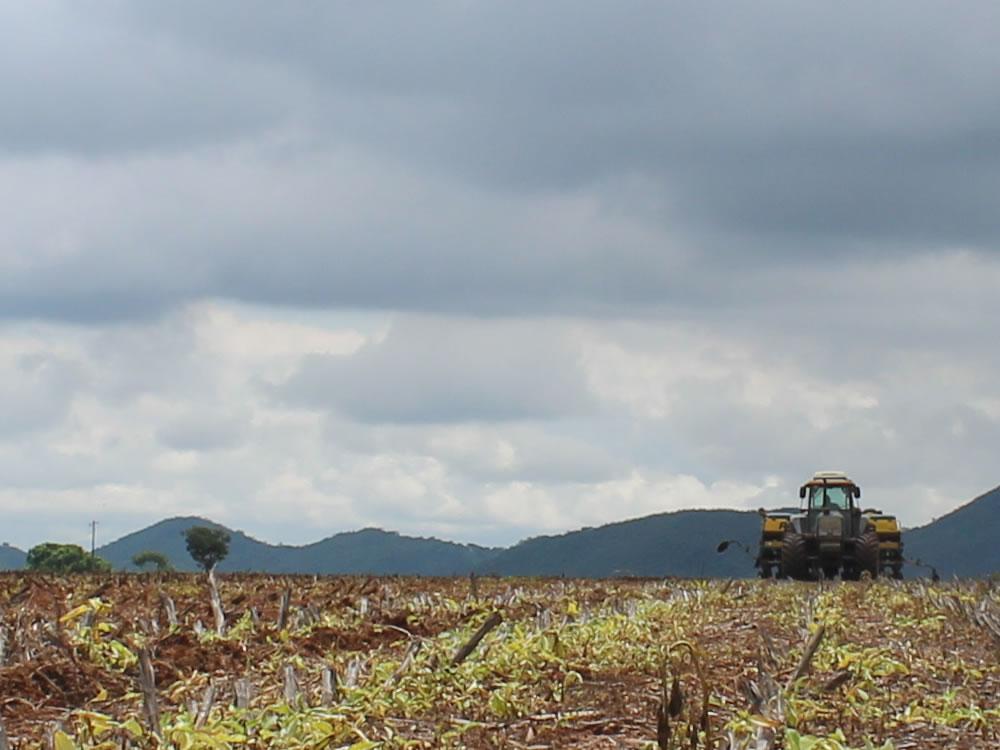 Imagem de Semeadura de soja em Goiás pode começar a partir desta quarta-feira, 25