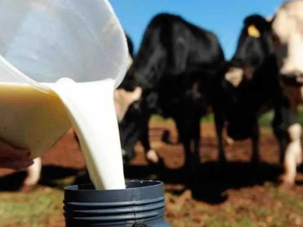 Imagem de Preço pago ao produtor de leite de Goiás cai em plena entressafra