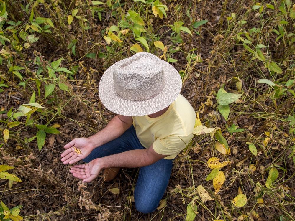Imagem de Expedição Safra avalia desafios e oportunidades para a produção de grãos em Rio Verde