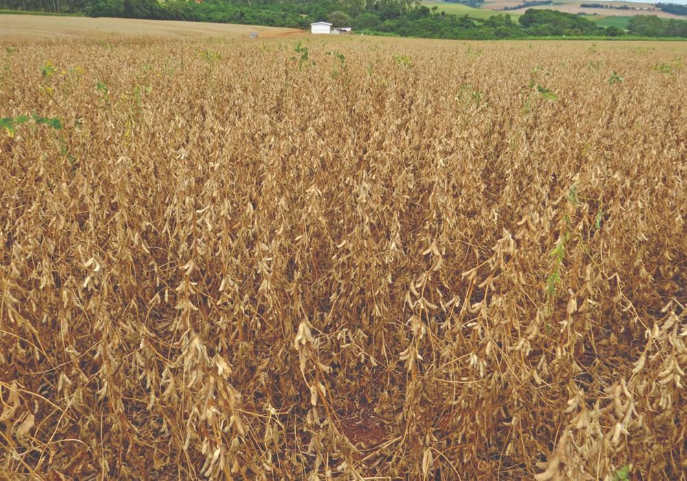 Imagem de Quebra da safra da soja gera perda bilionária em Goiás